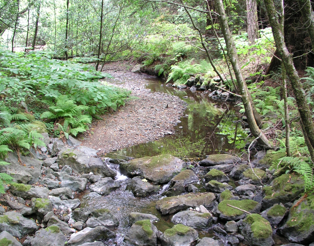A seasonal stream, San Francisco Bay Area (photo: Wiki Commons)
